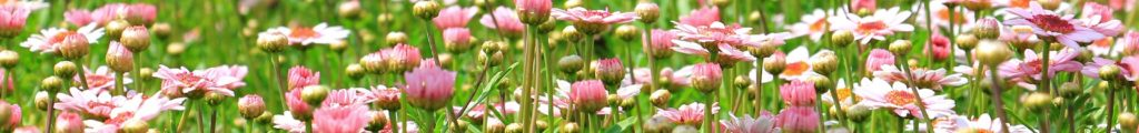 Clarisse fleurs sophrologie